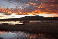 Sunset at Bosque del Apache National Wildlife Refuge, in New Mexico.