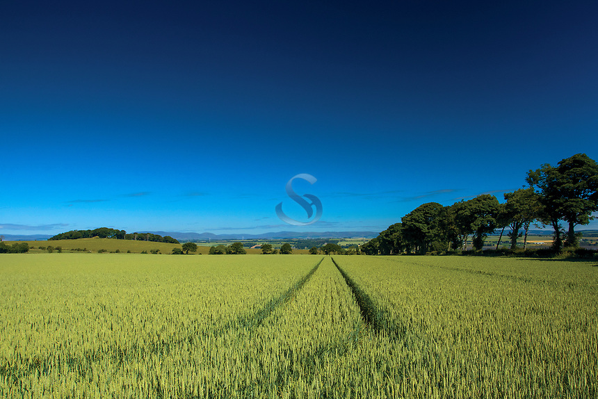 Looking towards the Angus hills from near Montrose, Angus
