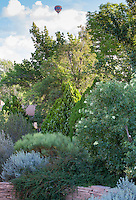 Hot air balloon over drought tolerant New Mexico backyard garden with Sambucus, Jasminum, Cytisus, Parthenium,Thuja Cercocarpus, design by Judith Phillips