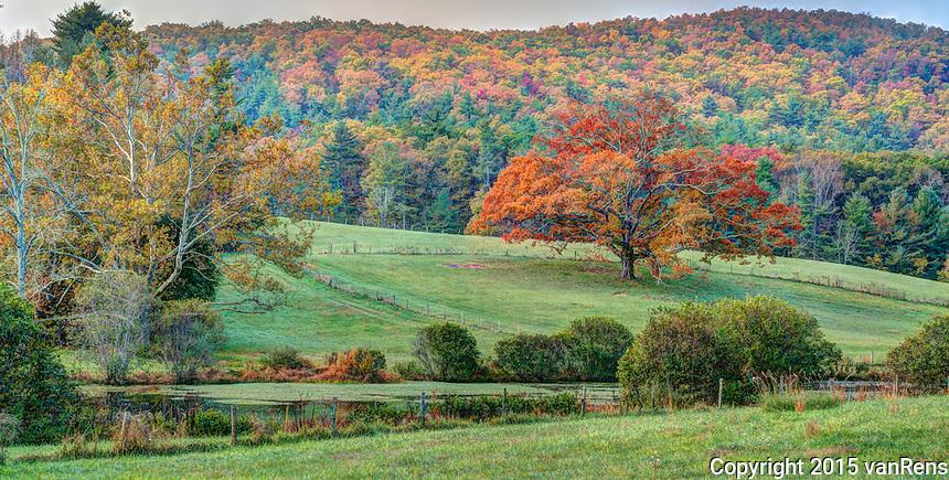 Rainy fall day looking at Carl Sandburg Historic Sites singular Oak in Field