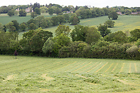 Field mown for silage<br /> ©Tim Scrivener Photographer 07850 303986<br />      ....Covering Agriculture In The UK....