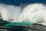 Splash from Humpback Whale breaching, Glacier Bay National Park & Preserve, Southeast Alaska, Summer.