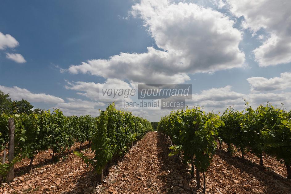 Europe/France/Aquitaine/24/Dordogne/Florimont Gaumier: Les vignoble du Vin de Domme à Moncalou,