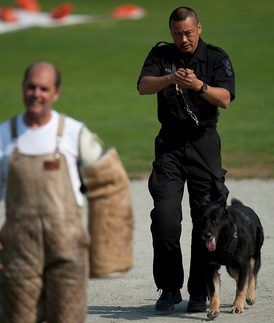 """Vancouver, Canada, Aug 6th 2009. World Police and Fire Games, Police Service Dog Competition.  After apprehending the suspect, also known as """"the agitator,"""" Constable Richard Wong of the Vancouver, British Colombia Police Department and his five-and-a-half- year-old male German Shepherd, PSD Knight, escort the agitator to a designated area during the Protection portion of the competition.  Constable Wong and PSD Knight went on to take second place in the Obedience and Overall finals as well as third in the Protection finals.   Photo by Gus Curtis"""