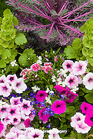 63821-22706 Container with petunias, dianthus, and lobelia,  Cantigny Park at Wheaton  IL