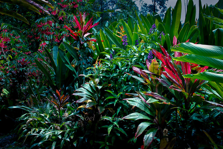 Charming Hawaiian Tropical Gardens Containing Exotic Plants, Amazing Tropical  Scenery, Garden Vignettes, Exotic Plants