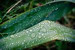 6.14.18 - Raindrops 2...