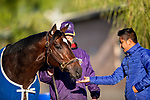 OCT 29: Breeders' Cup Sprint entrant Mitole, trained by Steven M. Asmussen, at Santa Anita Park in Arcadia, California on Oct 29, 2019. Evers/Eclipse Sportswire/Breeders' Cup