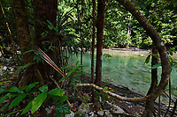 """Lowland rainforest, Karawawi River, Kumawa Peninsula, mainland New Guinea, Western Papua, Indonesian controlled New Guinea, on the Science et Images """"Expedition Papua, in the footsteps of Wallace"""", by Iris Foundation"""