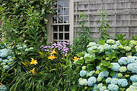Hydrangea and day lilies, Siasconset, Nantucket Island, MA