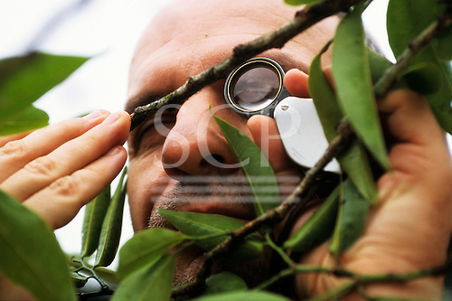 Makande, Gabon. Botanist examining a specimen in the rainforest using a hand lens.
