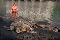 Woman and green Sea turtles, Hawaii, Chelonia mydas, (Honu) , Kona, Hawaii