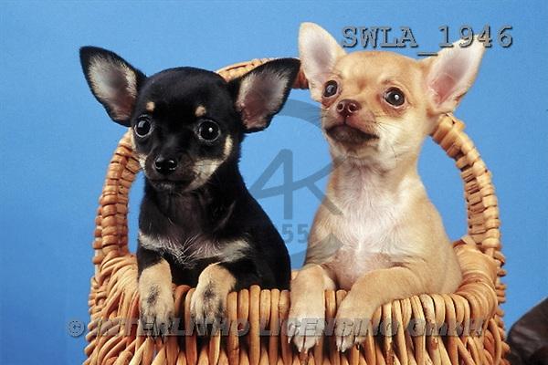 Carl, ANIMALS, photos(SWLA1946,#A#) Hunde, perros