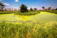 Fishing pond with an algae bloom in the Cimarron Recreation Area in the Cimarron National Grassland near Elkhart Kansas.