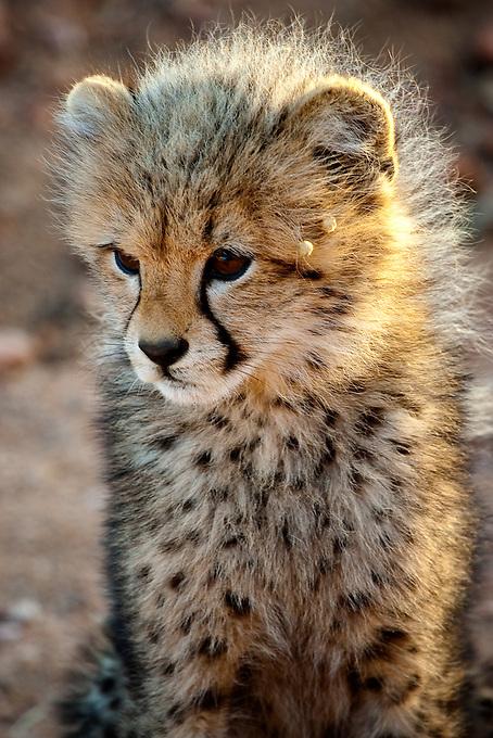 Wildlife photography outside Africa's Kruger National Park.