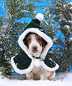 Xavier, CHRISTMAS ANIMALS, photos(SPCHdogs544,#XA#)