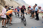Geraint Thomas (WAL) Team Ineos, Thibaut Pinot (FRA) Groupama-FDJ and Rigoberto Uran (COL) EF Education First on the Col d'Izoard during Stage 18 of the 2019 Tour de France running 208km from Embrun to Valloire, France. 25th July 2019.<br /> Picture: ASO/Alex Broadway | Cyclefile<br /> All photos usage must carry mandatory copyright credit (© Cyclefile | ASO/Alex Broadway)