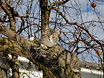 Cat in a tree, PA