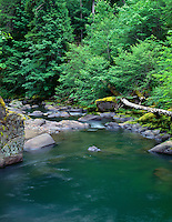 ORCAC_030 - USA, Oregon, Willamette National Forest, Middle Santiam Wilderness, Deep, green pool on Middle Santiam River and surrounding lush vegetation.