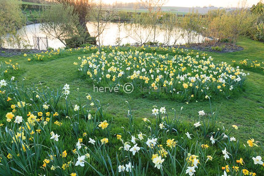 Jardin de la Ferme du Mont des R&eacute;collets:<br /> &quot;La Clairi&egrave;re&quot;: &nbsp;cercles concentriques de narcisses 'Tahiti' ,'Sherbourne', 'Golden Ducat', 'Yeloow cheerfulness', 'Buffawn','Hawera'. Derri&egrave;re, la mare. // France, garden of Ferme du Mont des R&eacute;collets, concentric circles of daffodils