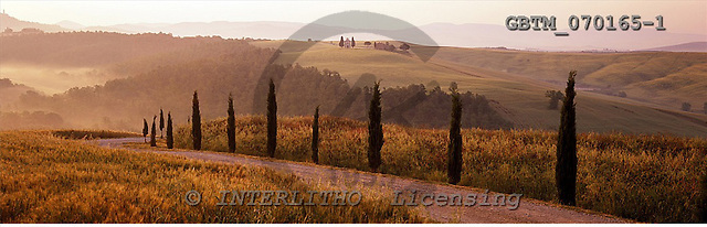 Tom Mackie, LANDSCAPES, panoramic, photos, Road & Cypress Trees, Val d' Orcia, Tuscany, Italy, GBTM070165-1,#L#