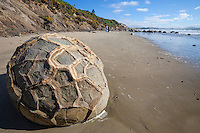 Interesting patterns on one of the Moeraki Boulders, a popular tourist attraction near the village of Moeraki, Otago, New Zealand - stock photo, canvas, fine art print