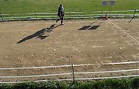 1. Sächsisches Mopsrennen auf der Windhunderennbahn in Eilenburg. Foto: Norman Rembarz