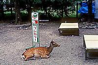 Nara: Deer at Nara Park. Photo '82.