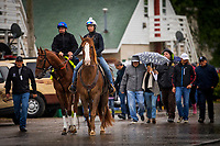 LOUISVILLE, KY - MAY 04: Gunnevera heads to the track at Churchill Downs on May 04, 2017 in Louisville, Kentucky. (Photo by Alex Evers/Eclipse Sportswire/Getty Images)