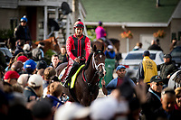 LOUISVILLE, KY - MAY 03: Classic empire weaves his way through a crowd of fans on his way to the track at Churchill Downs on May 03, 2017 in Louisville, Kentucky. (Photo by Alex Evers/Eclipse Sportswire/Getty Images)