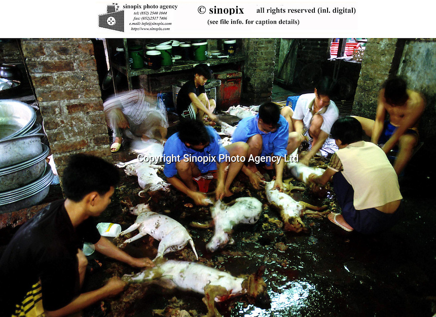 Dog meat is prepared in a restaurant by locals in Hanoi. Dogs meat is considered a delicacy in Vietnam with increasing numbers being illegally stolen and shipped across the border from Thailand.
