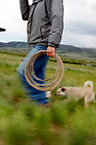 USA, Wyoming, Encampment, a cowboy carrying a rope walks with his dog, Big Creek Ranch