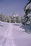 Cross-country skier trail through snow in winter, Castle Valley, near Donner Summit, North Lake Tahoe area, California