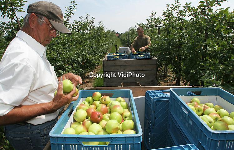 Foto: VidiPhoto..DREUMEL - Het appelseizoen is begonnen. Vroeger dan ooit. Fruittelers Erik en Wim Verhoeff uit Dreumel in het Land van Maas en Waal plukken dinsdag het eerste appelras dat rijp is, de Collina. De relatief nieuwe zomerappel is voornamelijk bestemd voor de Nederlandse markt. Doordat de meeste koelcellen vrijwel leeg zijn en er dus nauwelijks nog appels van vorig jaar voorradig zijn, wordt er voor de eerste appels een prima prijs geboden..