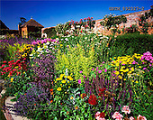 Tom Mackie, FLOWERS, photos, Walled garden, Packwood House, Lapworth, Warwickshire, England, GBTM892327-2,#F# Garten, jardín