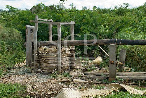 Pará State, Brazil. Aldeia Ipixuna (Araweté). Manioc press.