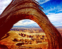 Juniper tree frames the Canyonlands N. P., Utah Grandview Point, September