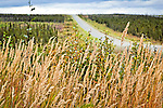 Dalton Hwy cutting through boreal forest. Arctic Lyme Grass blooming in the foreground. Arctic Alaska, Autumn.