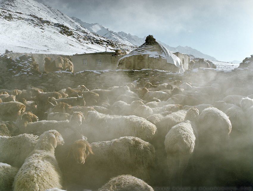 Sheep body heat creates this fog in the early morning, as temperature are close to -30..Campment of Tshar Tash (Haji Osman's camp), in the Wakhjir valley, at the source of the Oxus..Winter expedition through the Wakhan Corridor and into the Afghan Pamir mountains, to document the life of the Afghan Kyrgyz tribe. January/February 2008. Afghanistan