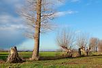Europa, DEU, Deutschland, Nordrhein Westfalen, NRW, Rheinland, Niederrhein, Mehr, Naturschutzgebiet Dueffel, Landschaft, Baeume, Typische Kopfweiden, , Kategorien und Themen, Natur, Umwelt, Landschaft, Landschaftsfotos, Landschaftsfotografie, Landschaftsfoto, Wetter, Himmel, Wolken, Wolkenkunde, Wetterbeobachtung, Wetterelemente, Wetterlage, Wetterkunde, Witterung, Witterungsbedingungen, Wettererscheinungen, Meteorologie, Bauernregeln, Wettervorhersage, Wolkenfotografie, Wetterphaenomene, Wolkenklassifikation, Wolkenbilder, Wolkenfoto......[Fuer die Nutzung gelten die jeweils gueltigen Allgemeinen Liefer-und Geschaeftsbedingungen. Nutzung nur gegen Verwendungsmeldung und Nachweis. Download der AGB unter http://www.image-box.com oder werden auf Anfrage zugesendet. Freigabe ist vorher erforderlich. Jede Nutzung des Fotos ist honorarpflichtig gemaess derzeit gueltiger MFM Liste - Kontakt, Uwe Schmid-Fotografie, Duisburg, Tel. (+49).2065.677997, archiv@image-box.com, www.image-box.com]