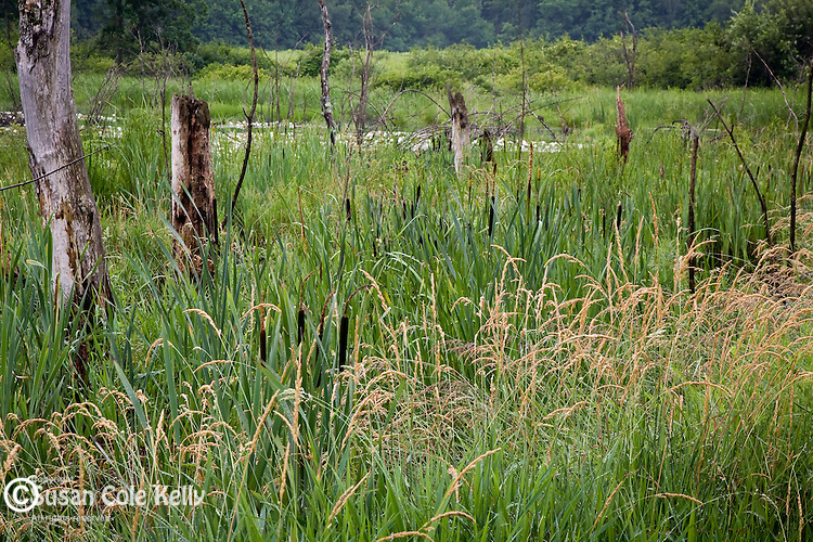 The Great Meadows National Wildlife Refuge includes the flood plain of the Sudbury River in Sudbury, MA, USA