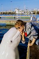 beluga whale, or white whale, Delphinapterus leucas, kissing woman, San Diego, California, USA, Pacific Ocean (c) MR