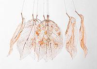 Leaf skeleton on white  background.  Fine art image.  Multiple Exposure