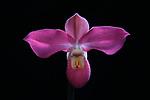2017_11_28 Orchids
