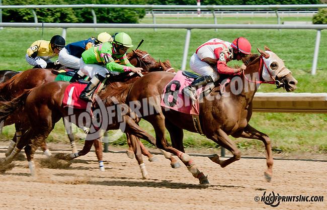 Regal Nurse winning at Delaware Park on 7/15/13