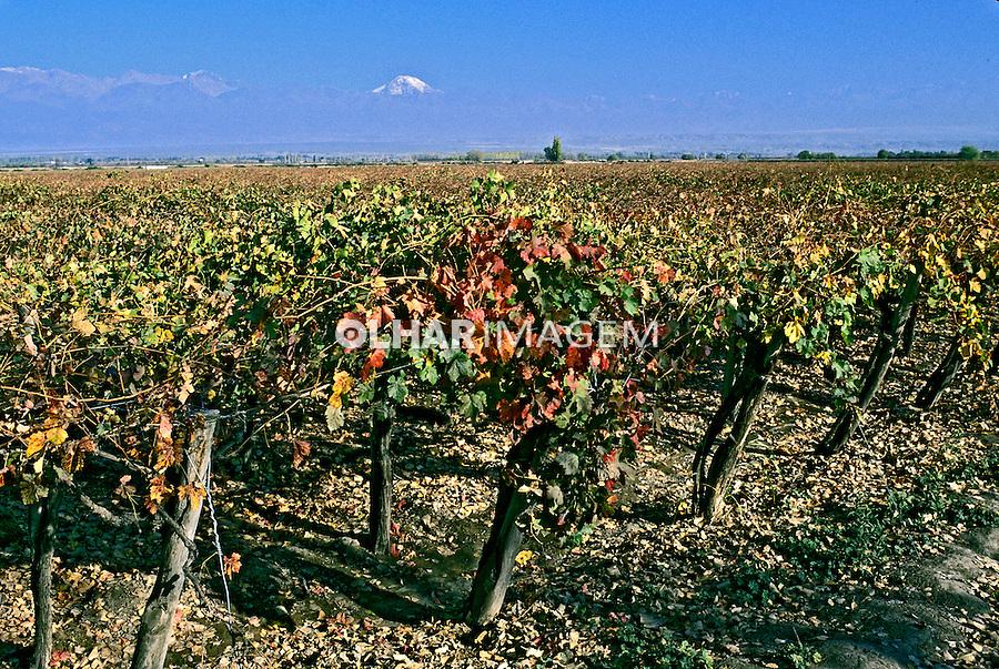 Plantação de videiras em Mendoza. Argentina. 1997. Foto de Ricardo Azoury.
