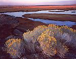 Malheur National Wildlife Refuge, OR<br /> Evening light on rabbit brush (Chrysothamnus nauseous) at the overlook above Buena Vista Ponds