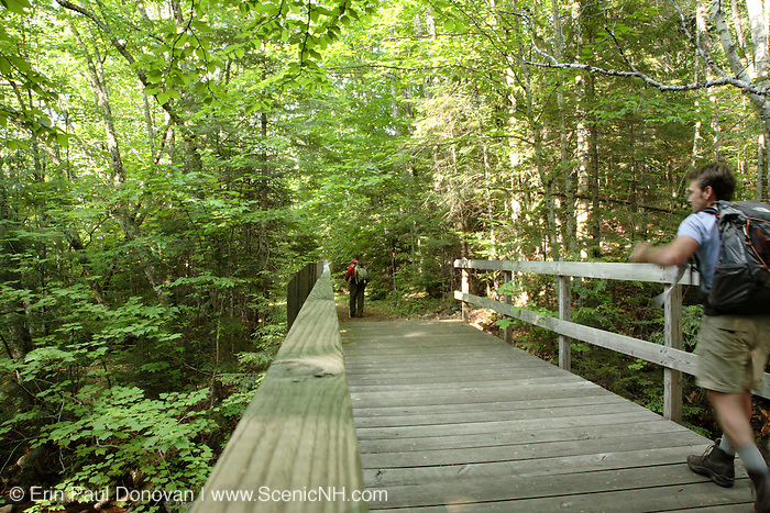 Greeley Ponds Trail in the White Mountains, New Hampshire  USA. This area was logged during the Mad River Logging Era