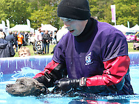 Atmosphere at Dogfest 2019 - South - held at Knebworth Park, Knebworth, Herts on May 11th 2019<br /> CAP/ROS<br /> ©ROS/Capital Pictures