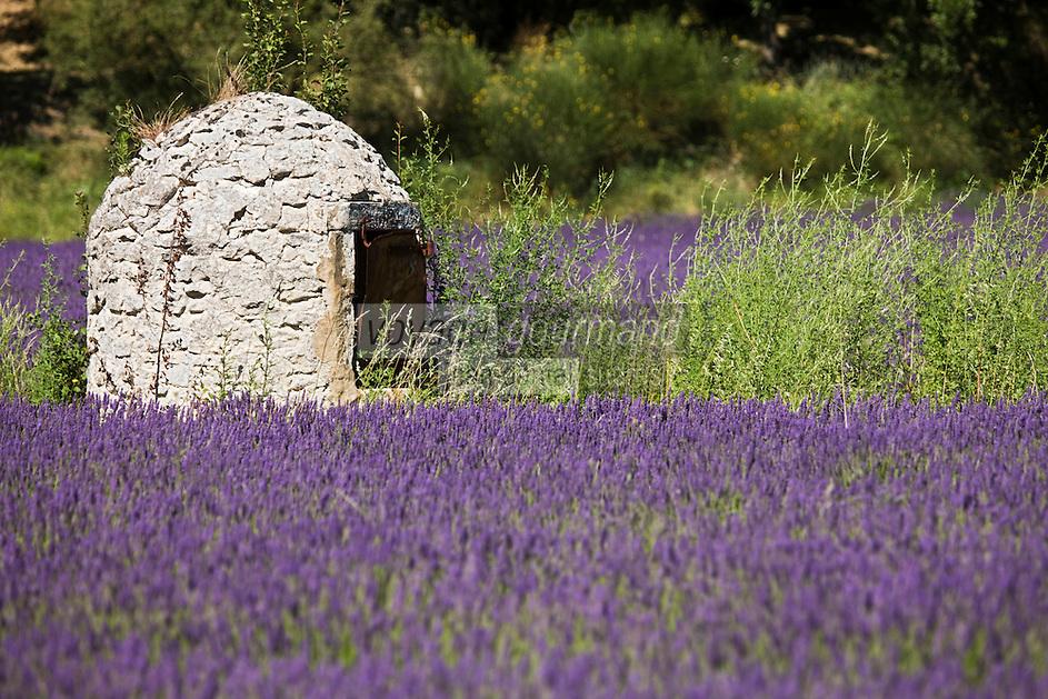 Europe/France/Rhône-Alpes/26/Drôme/Le Poët-Laval: Champ de lavande et vieux puits